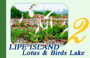 Lotus and Birds Lake and Lipe Island